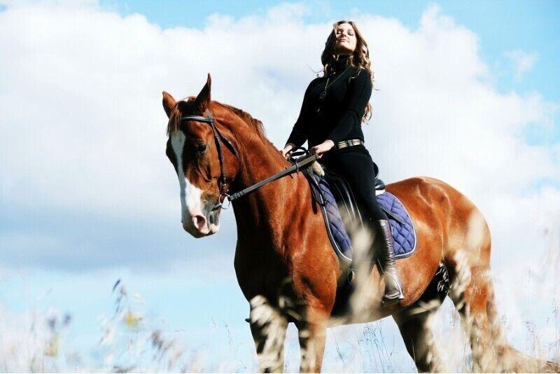 Незабываемая фотосессия с лошадьми в Вильнюсе