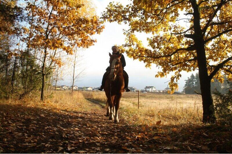 Izjāde ar zirgu ģimenei (vecāki+bērni)