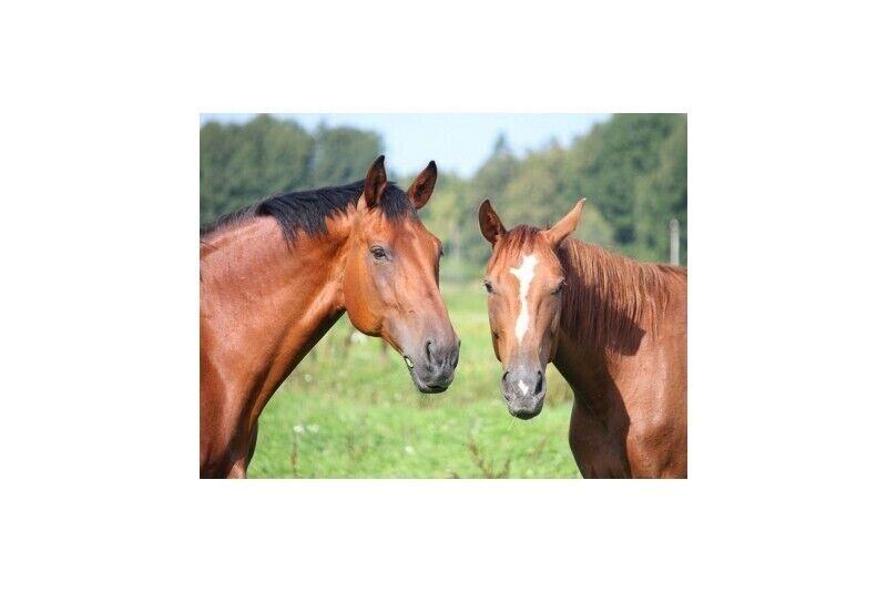Izjāde ar zirgu Rasās