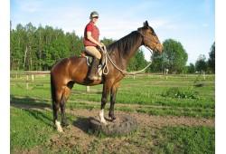 Patstāvīga izjāde ar zirgu