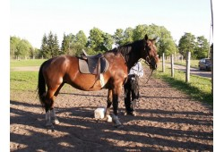 Izjāde ar zirgu instruktora vadībā