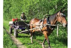 Vizināšanās zirga pajūgā, vai ar kamanām