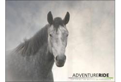 Izjāde skaistā apvidū no zirgu staļļa Adventure Ride