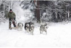 Увлекательная поездка в зимней собачьей упряжке для 2 персон в Огре