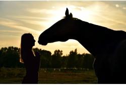 Прогулка на лошадях + фотографирование