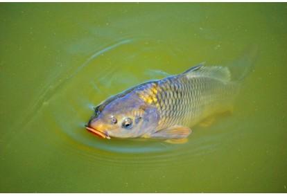 Рыбалка и приготовление улова в усадьбе  Karpynė для двоих