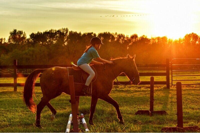 """Aizraujošs un jautrs piedzīvojums bērnam - izjāde ar zirgu vai poniju zirgu stallī """"Agates"""""""