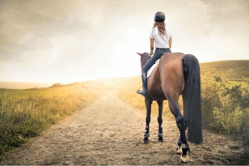 Верховая езда на лошади по окрестностям Аникщай