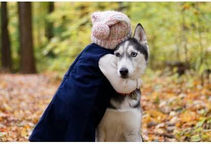 Ģimenes pārgājiens ar kamanu suņiem - haskijiem Cecīļu dabas takā