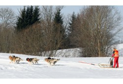 Piedzīvojumu brauciens sniega suņu pajūgā ģimenei  Ogrē