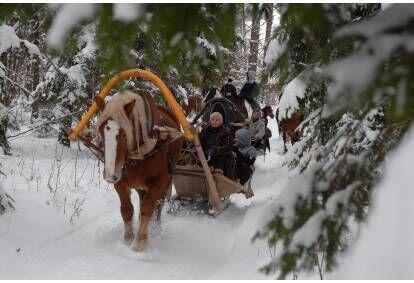 """Езда в упряжке на повозке или на санях и пикник в парке """"Daugavas loki"""""""